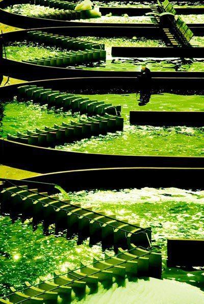 Tảo biển Nhật Bản Spirulina